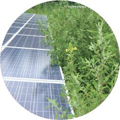 太陽光発電所内の雑草と上手く付き合う方法。