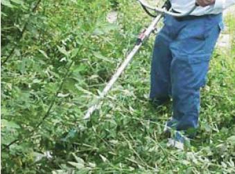 草刈り・伐採作業